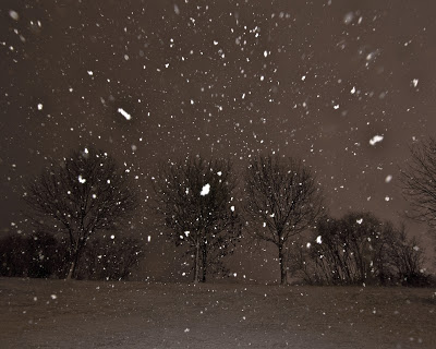 trees_in_a_night_snow_storm